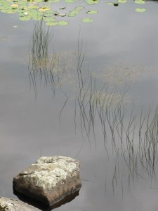 Glendalough-Rock-pool-IMG_2221-768x1024