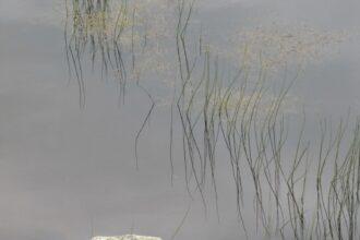 Glendalough-Rock-pool-IMG_2221-768x1024